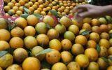 Naranjas, una nueva clave para combustibles más eficientes