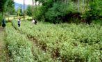 Cajamarca: temperatura llegó hasta los 2 grados bajo cero
