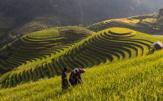 Mu Cang Chai, un lugar lleno de hermosas terrazas de arroz