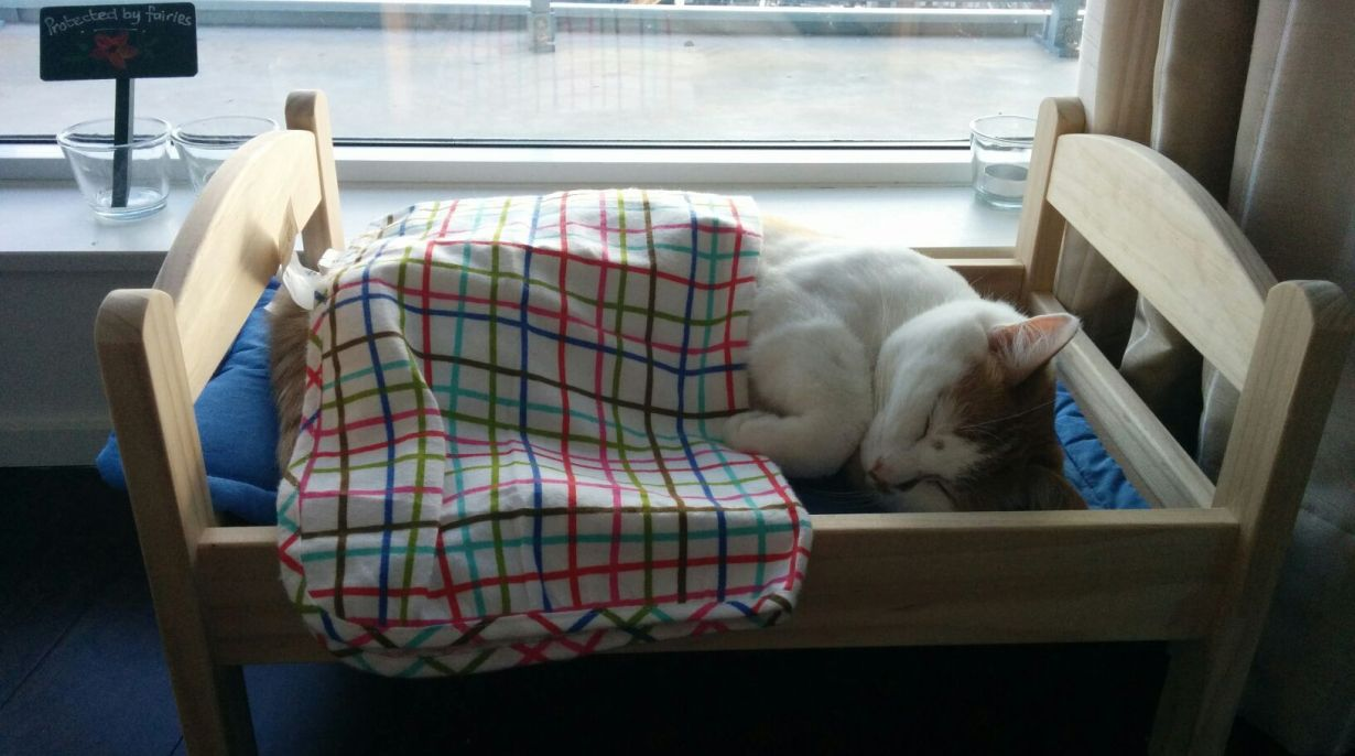 Google 11 gatos durmiendo en camas de mu ecas alegrar n for Cama munecas ikea