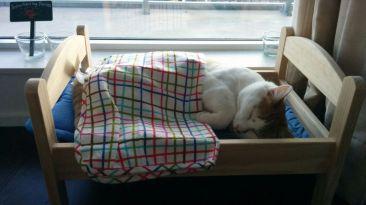 11 gatos durmiendo en camas de muñecas alegrarán tu día (FOTOS)