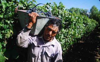 La otra ruta del vino: Recorre estas bodegas en Argentina