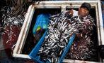Decomisan toneladas de anchoveta que era transportada sin hielo