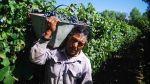 La otra ruta del vino: Recorre estas bodegas en Argentina - Noticias de rutas