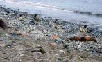 Áncash: medio millar de lobos marinos muertos