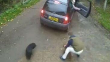 Facebook: indignante robo de mascotas impacta en YouTube