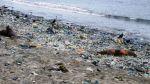 Áncash: unos 500 lobos marinos muertos halló policía ecológica - Noticias de limpieza de playas