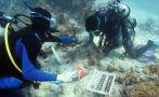 Corales vuelven a la vida gracias a un trasplante pionero