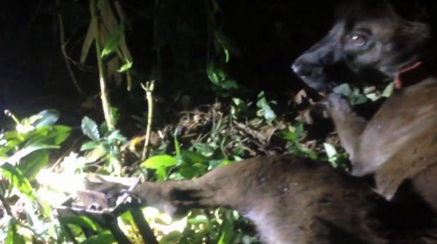 YouTube: activista rescata a perro de trampa para animales