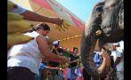 Famosa elefanta se jubila después de 30 años de servicio