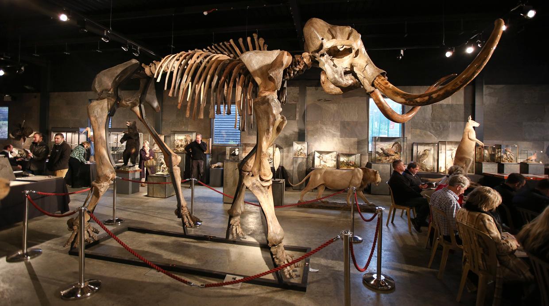 Resultado de imagen de mamut lanudo -volver -a -la -vida -clonar