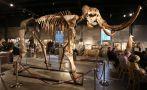 Este esqueleto de mamut lanudo fue subastado por US$ 300.000
