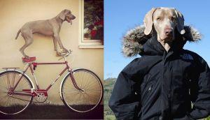 Instagram: adorable perro protagoniza divertidas escenas