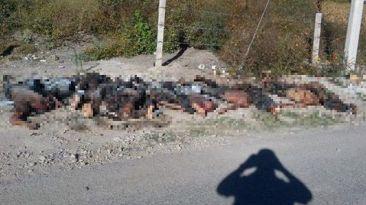 México: Hallan 11 cuerpos decapitados y quemados en Guerrero