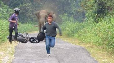 YouTube: un elefante enojado persigue a motociclistas