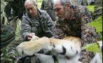 Vladimir Putin: Su tigre mató a 18 cabras en China