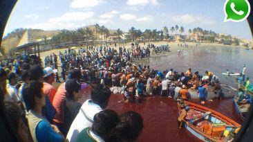 Vía WhatsApp: Así terminó la ballena varada en puerto de Paita