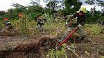 La hoja de coca ilegal es erradicada en el Trapecio Amazónico - Noticias de general pnp