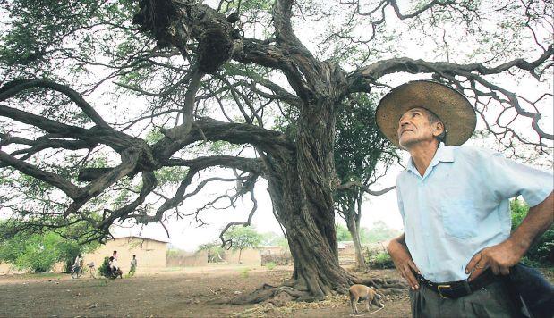 Bosques de algarrobo se ven afectados por aparición de hongos