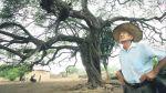 Bosques de algarrobo se ven afectados por aparición de hongos - Noticias de tumbes