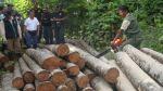 Tala ilegal: Empresarios dicen qué el DL 1319 no la frenará - Noticias de fauna silvestre