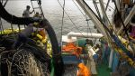 Scotiabank recortó de 2,9% a 2,6% estimación del PBI para 2014 - Noticias de pesca de anchoveta