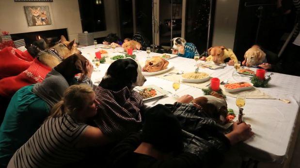 YouTube: un perro y trece gatos en adorable cena de Navidad