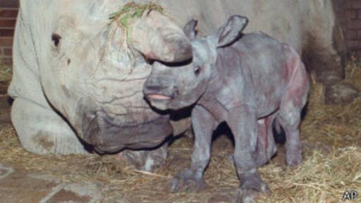 ¿Cómo salvar una especie sin machos capaces de reproducirse?