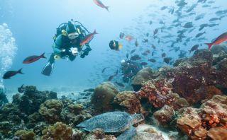 Paraíso en Ecuador: Un paseo por las asombrosas Islas Galápagos