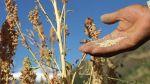 Empresarios de Perú no creen en cifras de Bolivia sobre quinua - Noticias de quinua