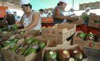 Frutas y hortalizas frescas lideran nuestras agroexportaciones