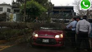 Vía WhatsApp: árbol cayó encima de carro frente a U. Agraria