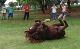 YouTube: imperdible la reacción de caballo que fue liberado