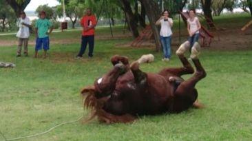 YouTube: la reacción de este caballo liberado te impresionará