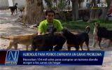 Albergue con 40 perros será desalojado en una semana