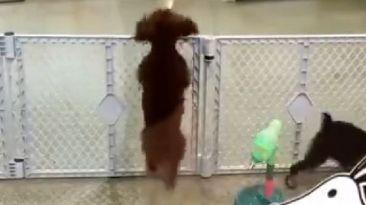 Facebook: perro reacciona de forma sorpresiva al ver a su dueño