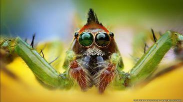 Los extraordinarios colores de las arañas al máximo detalle
