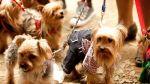 Municipalidad de Lima aprobó ordenanza para proteger animales - Noticias de animales domésticos