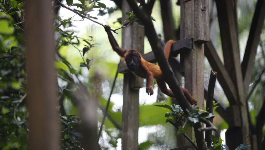 Conoce los simpáticos animales de la selva de Puerto Maldonado