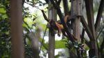 Conoce los simpáticos animales de la selva de Puerto Maldonado - Noticias de puerto maldonado