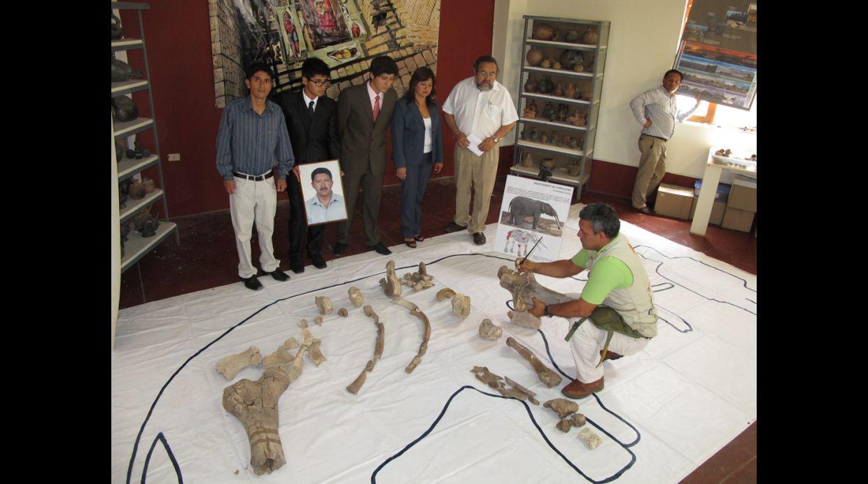 Fósiles de 70 millones de años se exhibirán en Sipán