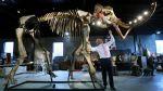 Científico estadounidense quiere revivir a los mamuts - Noticias de george church
