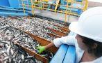 Produce inició la pesca de anchoveta antes de lo prevista