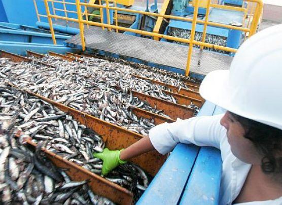 Cierre de la primera temporada de pesca podría adelantarse