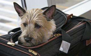 A bordo: Nueva York tendrá el primer aeropuerto para animales