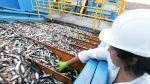 Cierre de la primera temporada de pesca podría adelantarse - Noticias de elena conterno