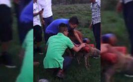 YouTube: ira mundial por atentado contra perro en Centroamérica