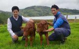 Nace el primer clon bovino en el Perú