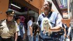 Venta ilegal de mascotas: 10 cachorros fueron rescatados - Noticias de ordenanza municipal