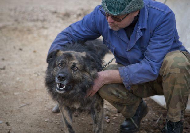 Medo es el único perro en Croacia al que la ley le prohíbe ladrar. (AP).
